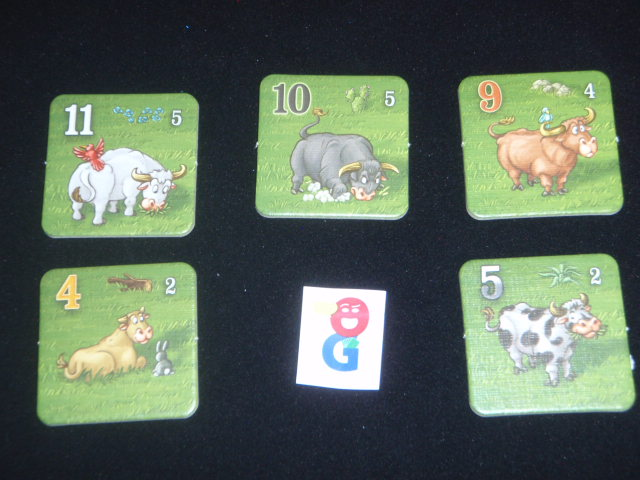The five different types of cows